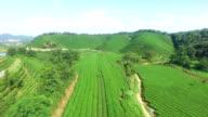 Sky, tea bushes, hill and farm, hyper lapse. video