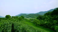 Sky, tea trees,hill and farm, real time. video