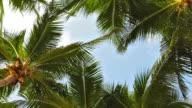 Sky through palm tree leaf video