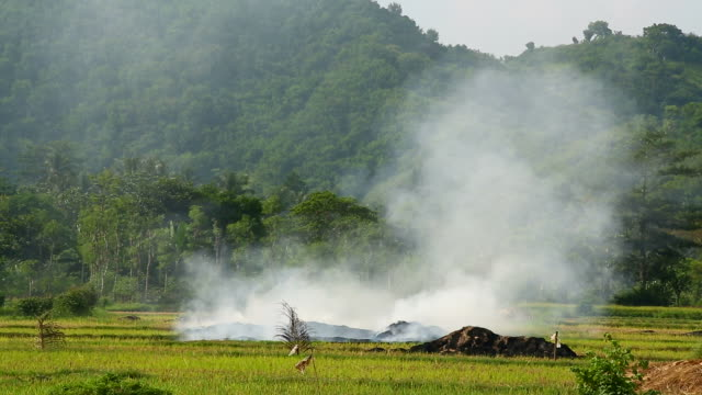 Slash and burn rice field in Asia video