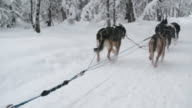 Sled dog team running a race video