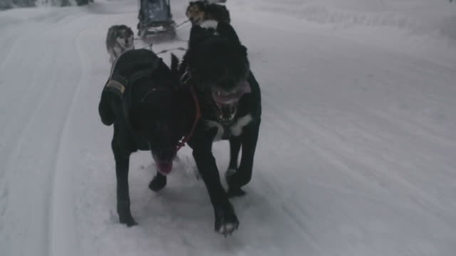 Sled dogs racing through snow video