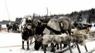 Sled of reindeers on the Yamal Peninsula video