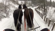 Sleds and horses video