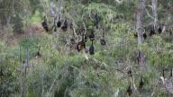 Sleeping Bats video