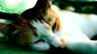 Sleeping cat video