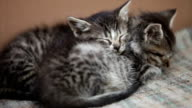 sleeping little kittens video