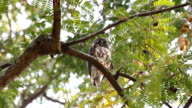 Sleeping Owl video