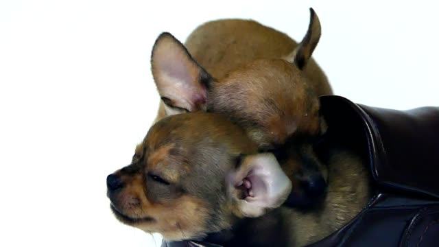 Sleeping puppies video