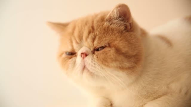 sleepy cat video