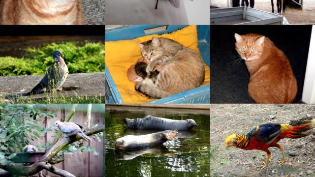 Slide show animals video