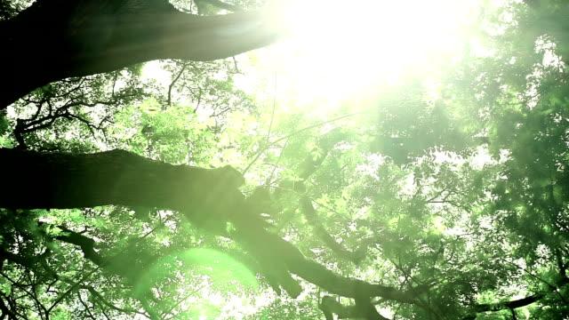 Slider shot in the springtime forest video