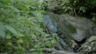 Slider shot of a small water stream in a green forest video