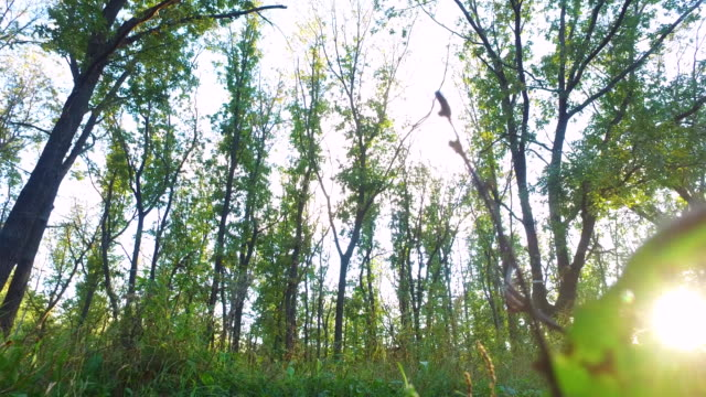 Slim teenager boy is running on paths and trails in the forest. Boy is trained good running. Sports in nature. video