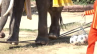HD Slo mo elephant play show. video