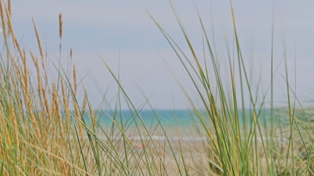 Slo Mo. Wind blowing long grass, sea in background and a seagull flying by. video
