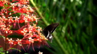Slomo butterfly video