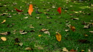 Slomo Falling Leaves. video
