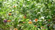 Slomo Orange Butterfly Fly Away From Nice Garden Scene. video