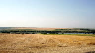 sloping field of wheat and the road in the autumn video