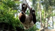 sloth video