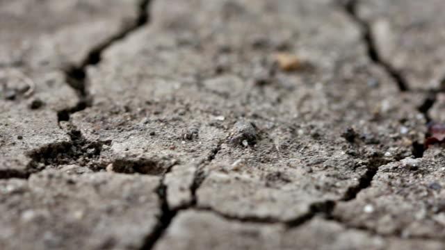 Slow dolly macro cracked soil video
