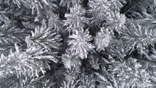 Slow Motion Aerial of Winter Season Snow Flakes Falling on Frozen Tree Tops in Mountain Forest video
