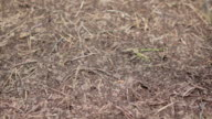 Slow motion: Ants video