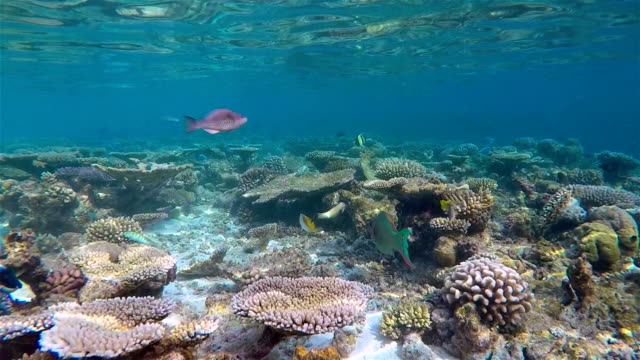 Slow Motion coral reef on Maldives - South Ari Atoll video