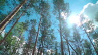 Slow motion: Forest through the car window video