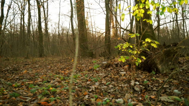 Slow motion in the forest. video