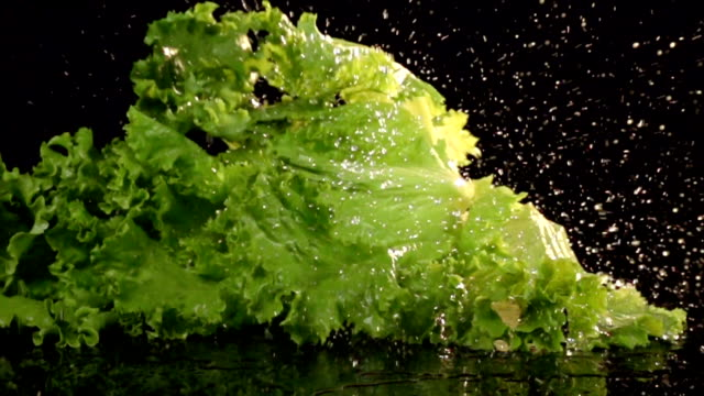 Slow Motion Lettuce video