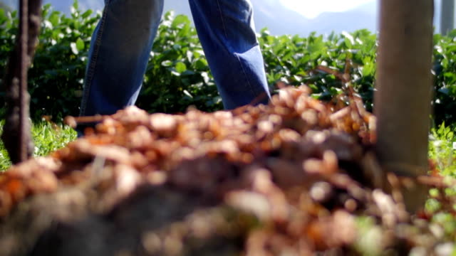 Slow motion of farmer's legs walking in the nature video