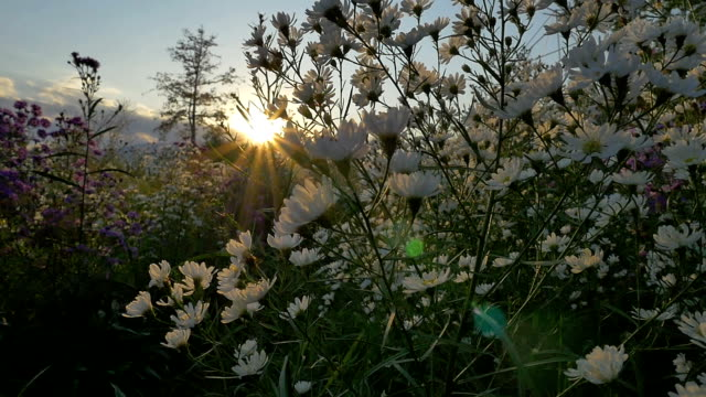Slow motion of Flower field with sun light in the morning video