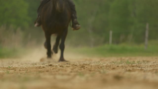 Slow motion of horse galloping hooves passing camera with sound video