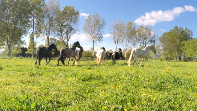Slow motion of horses in the countryside video
