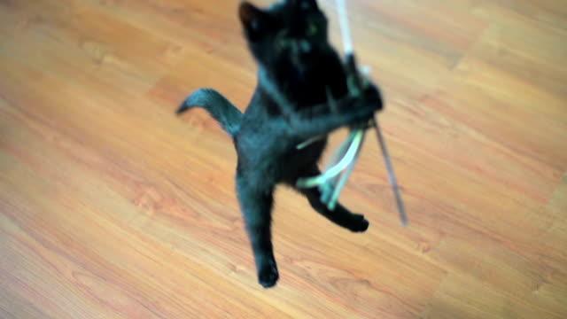 Slow Motion of Jumping Kitten. video