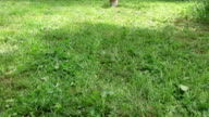 slow motion of little fluffy dog run in nature video