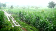 slow motion of rain in field agriculture with lateritic soil video