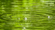 Slow motion of water droplets on a pond video