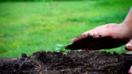 Slow motion of woman hand planting small tree in the soil with watering video