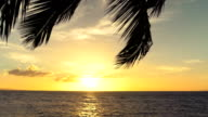 Slow Motion Palm Trees Blowing in the Wind Tropical Sunset over Pacific OCean video