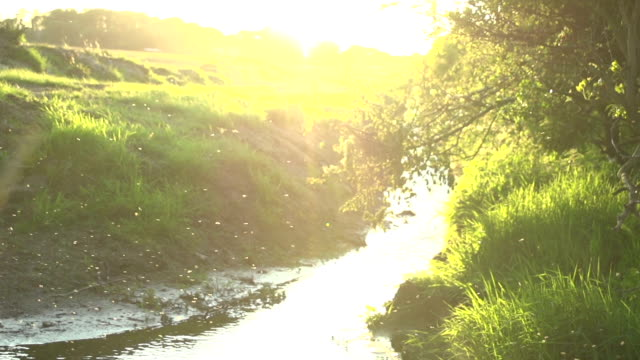 Slow Motion River Flies At Sunset video