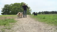 Slow Motion Shot Of Man Exercising Dogs In Countryside video