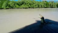 Slow motion shot of Saltwater Crocodile jumping video