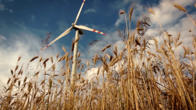 Slow motion slide over wheat with wind turbines video
