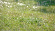 Slow motion: Spray on grass video