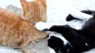 Slow motion: Two cats playing video