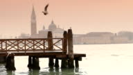 HD1080 Slow Motion Venice - Birds Flying video