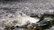 Slow Motion Water On The River Dee video